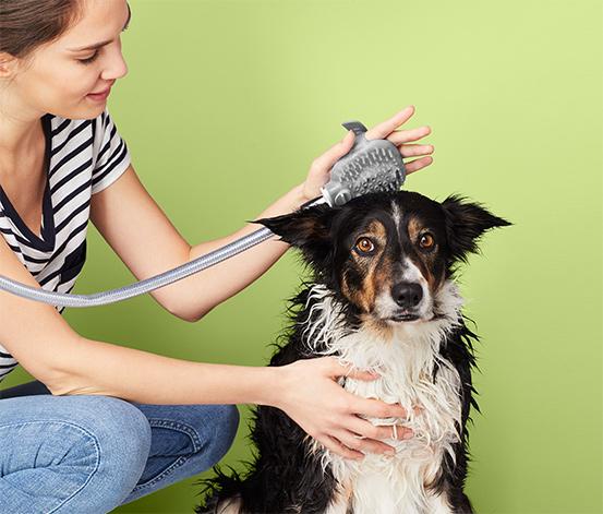 Sprcha pro psy