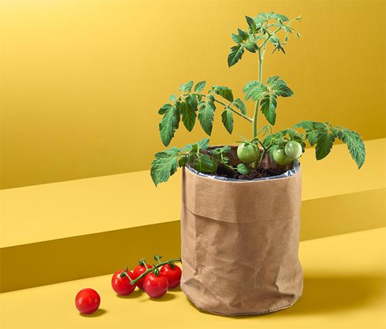 Osivo v papírovém sáčku: rajčata