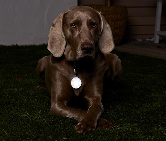 Přívěsek s LED na psí obojek