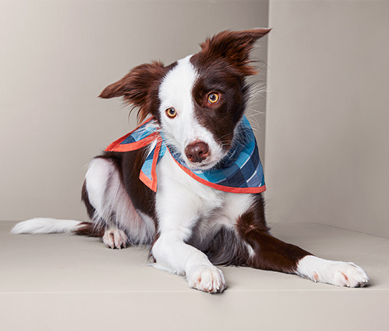 Šátek pro psy